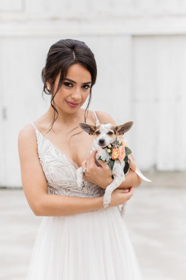 Adoptable Dog at Wedding