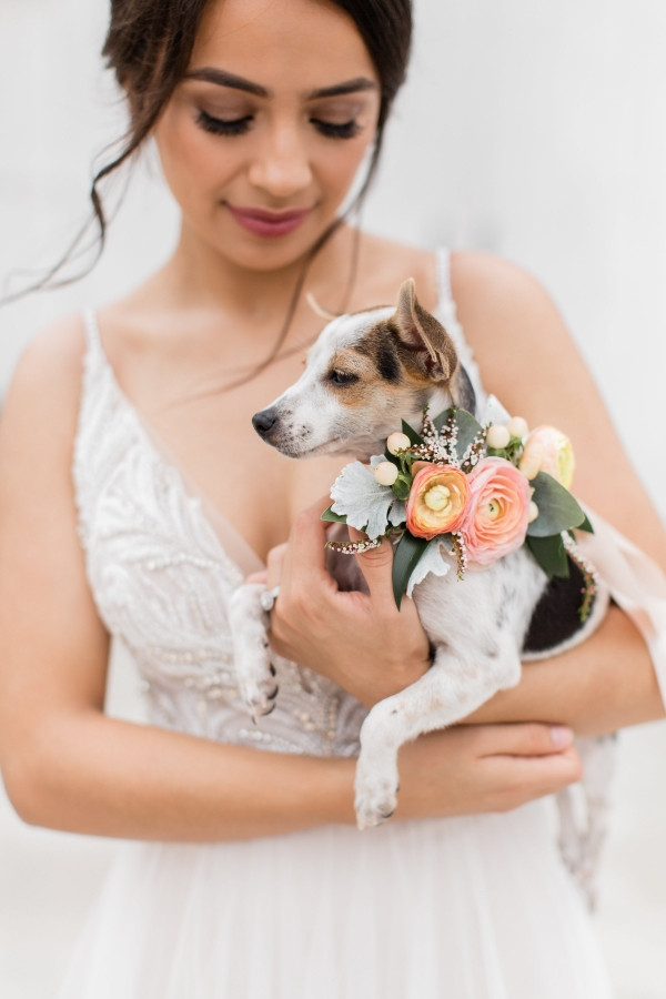 Bride with Dog for Adoption