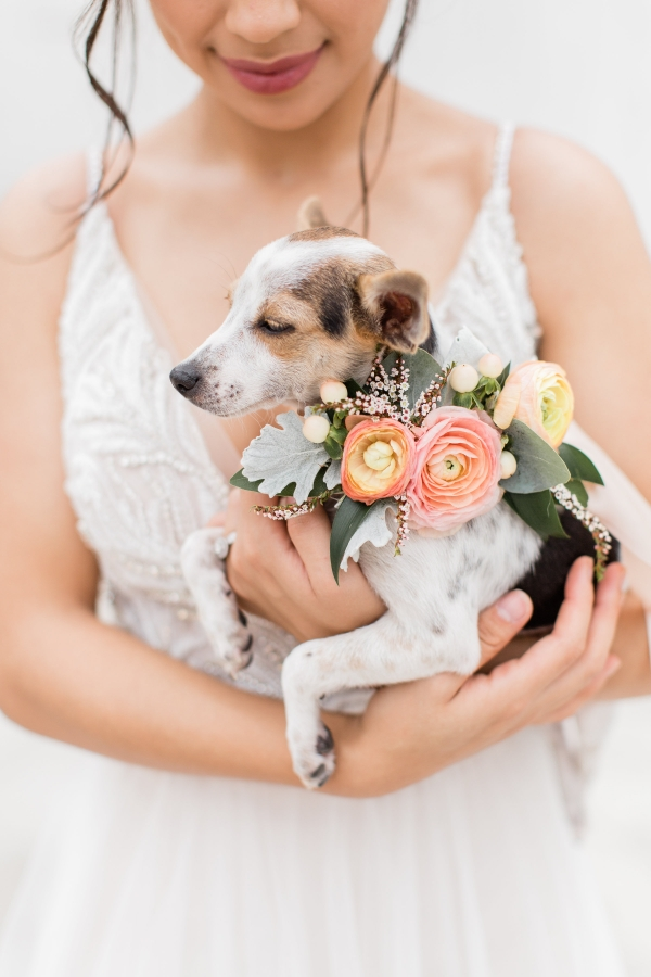 Bride with Rescue Dog