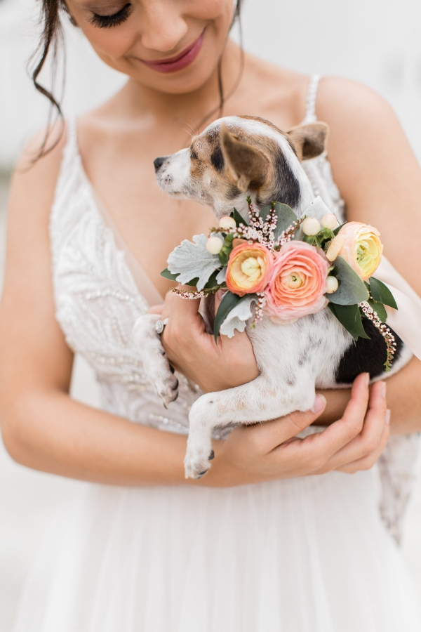 Puppy with Floral Collar
