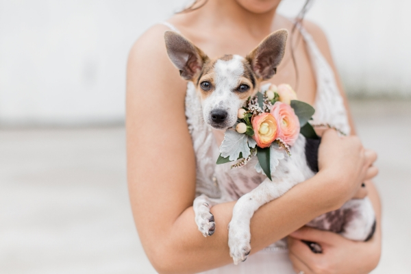 Rescue Dog at Wedding with Bride