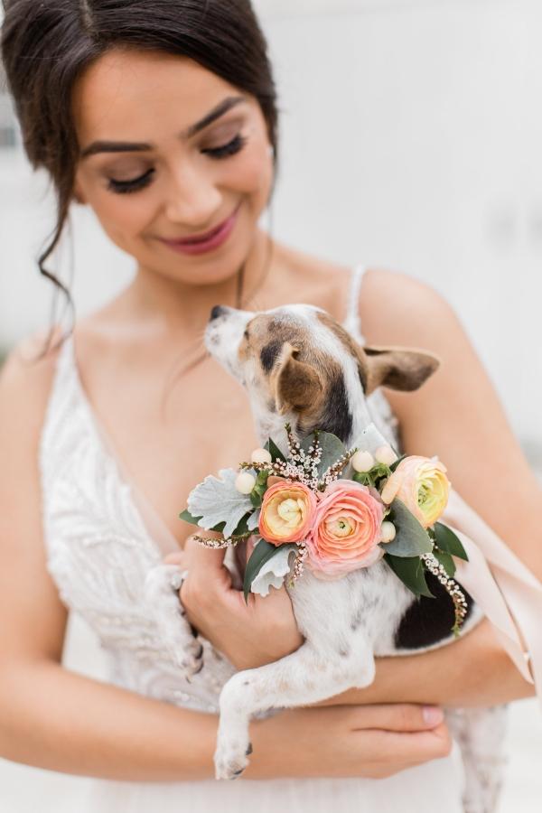 Rescue Puppy at Wedding