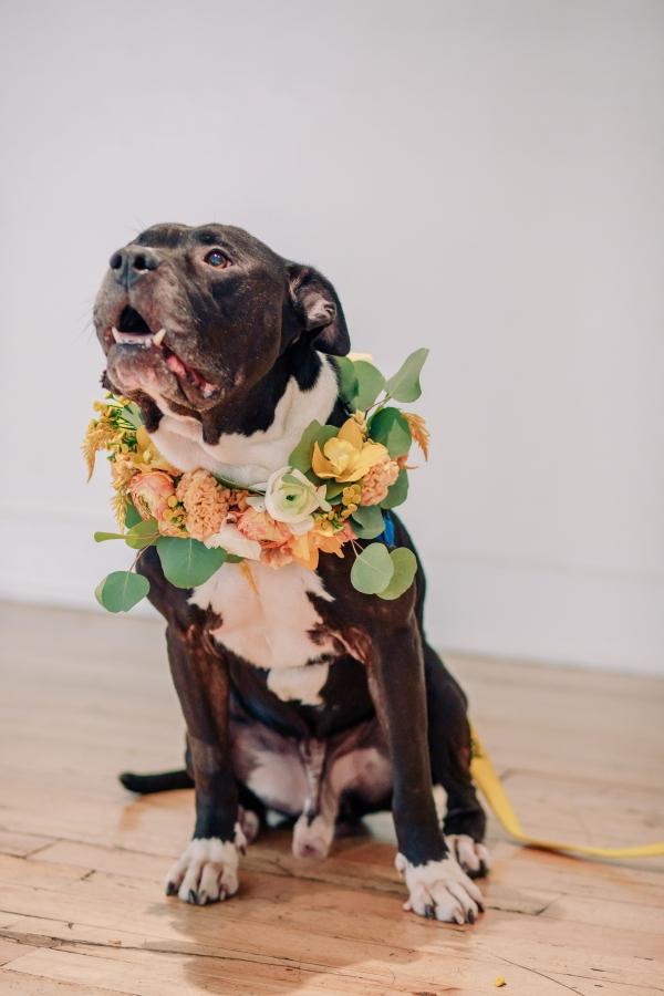 Dog in Flower Collar