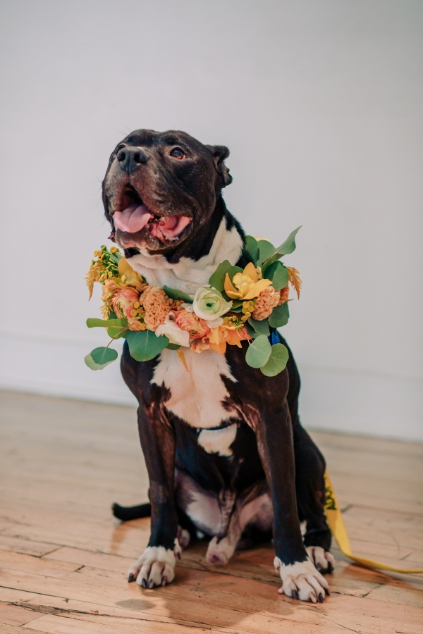 Wedding Inspiration with Adoptable Dogs (22)