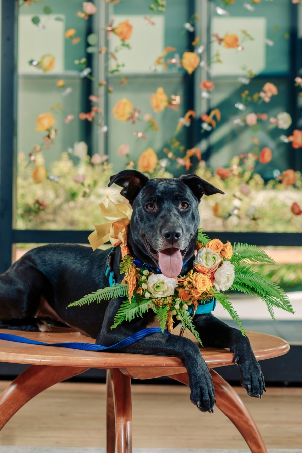 Wedding Inspiration with Adoptable Dogs (39)