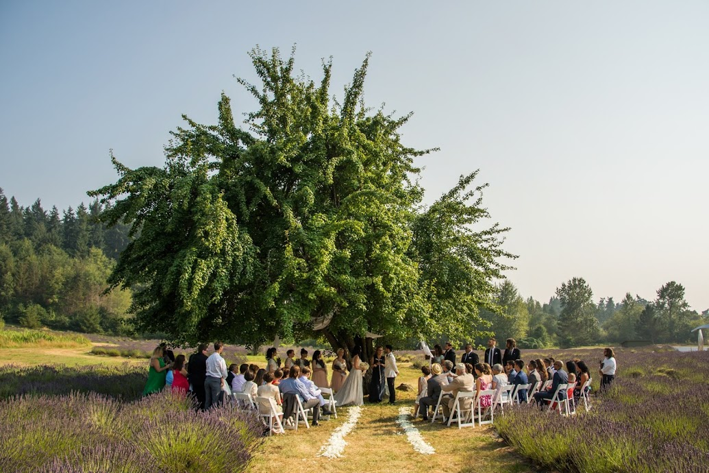 lavenderfarmwedding