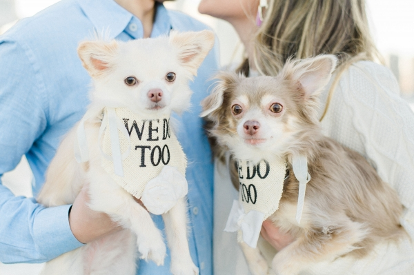 Olive Park Engagement Session with Puppies Nicole Jansma (4)